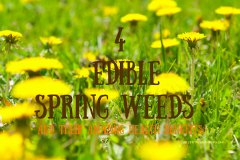 4 Edible Weeds & Their Health Benefits